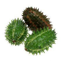 Cactusvijg 5cm groenbruin 6st