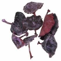 Kalix paddenstoel lila, wit gewassen 100st