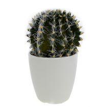 Cactus in een pot groen 14cm