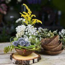 Kokos decoratie schaal naturel gepolijst 6st