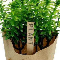 Kruiden in een groene pot van 16 cm