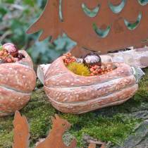 Pompoen voor opplant Sinaasappel 28 × 15 × 14cm