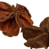 Land lotus natuur 50st
