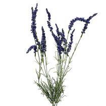 Lavendelstruik 55cm blauw