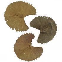 Lotusbladeren gedroogd natuur droog decoratie lelieblad 50st