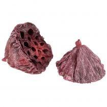 Lotus Mix Rood, wit gewassen 25st