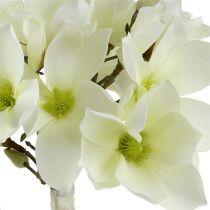 Magnolia bos wit 40cm 5st