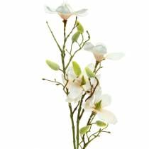 Magnolia perzik 85cm