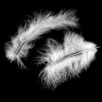 Decoratieve veren, maraboe-veren, paasversieringen, veren voor handwerk Wit 45g