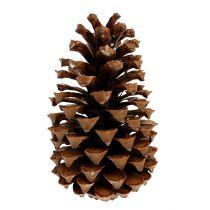 Maritima cones 18+ naturel 25st