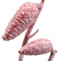 Maritieme kegels op tak roze / wit gewaxt 400g