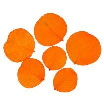Moneta-bladeren abrikoos 50g