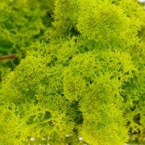 Decoratief mos lichtgroen rendiermos bewaard handwerkmateriaal 400g