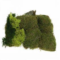 Decoratief mos voor handwerk mix groen, lichtgroen natuurlijk mos 100g