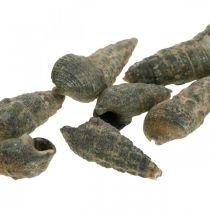 Natuurlijke artikelen, natuurlijke slakkenhuizen 6-10 mm, mariene decoraties 1 kg