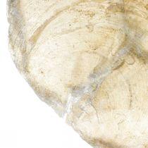 Stranddecoraties, Capiz-schelpen 5–10 cm, natuurlijke artikelen, parelmoer, maritiem 1kg