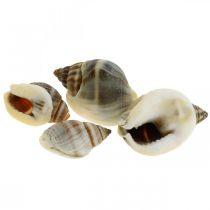 Natuurlijke decoratie, slakkenschalen naturel 1–2 cm, schelpdecoratie 1 kg