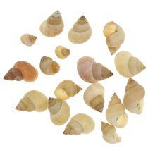 Natuurlijke slakkenmosselen 1kg