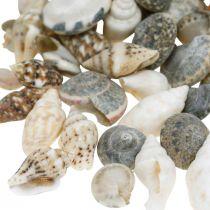 Deco slakkenhuis mini natuur mix maritieme decoratie 1kg