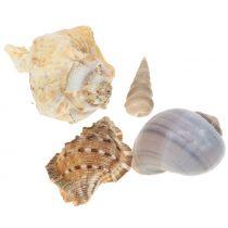 Shell mix naturel 500g
