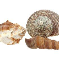 Shellmix voor maritieme decoratie natuur 400g