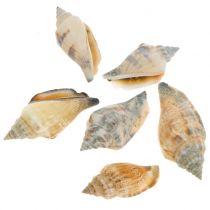 Schelpenmix naturel 3cm - 5cm 200g