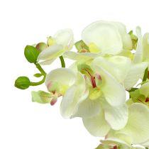 Orchidee lichtgroen 56cm 6st