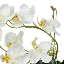 Phalaenopsis orchidee voor het ophangen van H26cm creme