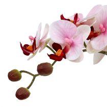 Orchidee roze in keramische pot 31cm