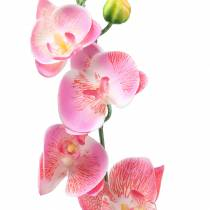 Orchidee phalaenopsis kunstroze 60cm