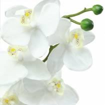 Orchidee wit 77cm