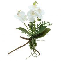 Witte orchidee met mosballen en wortels 36cm