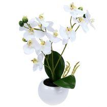 Orchideeën in een witte pot van 30 cm
