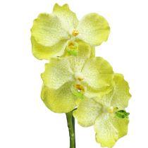 Orchidee met wortels lichtgroen L43cm