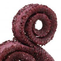 Palm Male Rood, gewassen wit 25st