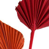 Palmspeer assorti rood / oranje 50st