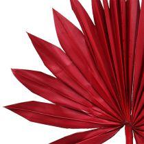Palmspeer Sun Red 30st