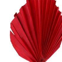 Palmspeer mini rood 100st