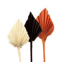 Palmspeer mini assorti Marokko 30st