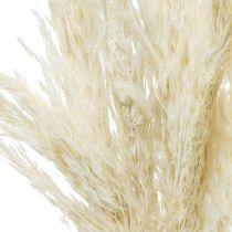 Pampagras gedroogd gebleekt droog decoratie 65-75cm 6st in bos