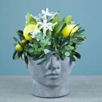 Plantkop buste van beton voor planten grijs H12cm 2st