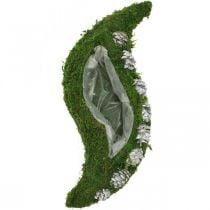 Plantenbak mos en kegels golfgroen, gewassen wit 41 × 15cm