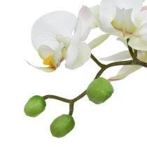 Phalaenopsis creme in een keramische pot 33cm