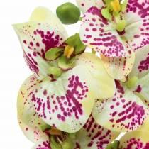Orchidee kunsttak Phaelaenopsis Groen Roze H49cm
