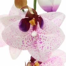 Orchidee phaleanopsis kunstmatig wit, paars 43cm