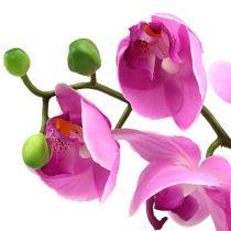 Orchidee Phalaenopsis Roze 77cm