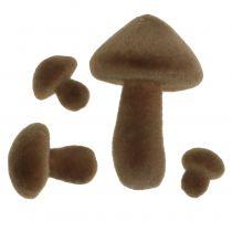 Gevlokt champignons bruin 12st