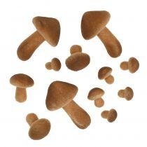 Champignons lichtbruin mix 2cm - 8cm 12st