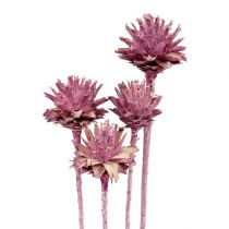 Leucospermum 1 braam bevroren 25st