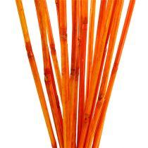Rotan stengels oranje 100cm 20st.
